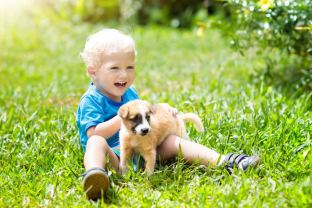 Picture of child playing with puppy in grass